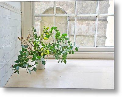 House Plant Metal Print by Tom Gowanlock