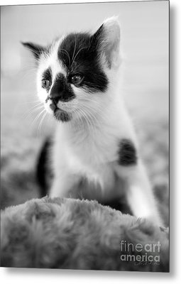 Kitten Dreaming Metal Print by Iris Richardson