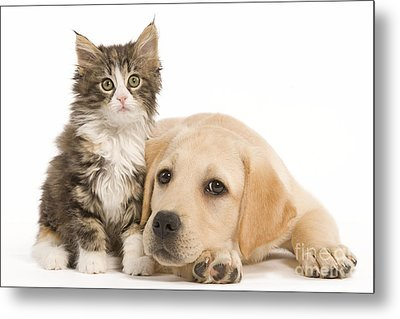 Labrador And Forest Cat Metal Print by Jean-Michel Labat