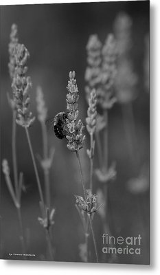 Lavender And The Bee Metal Print by Tannis  Baldwin