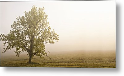 Lost In The Fog Metal Print by Andrew Soundarajan