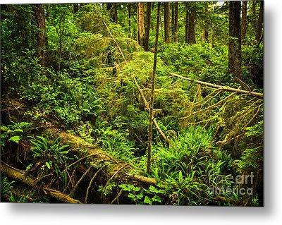 Lush Temperate Rainforest Metal Print by Elena Elisseeva