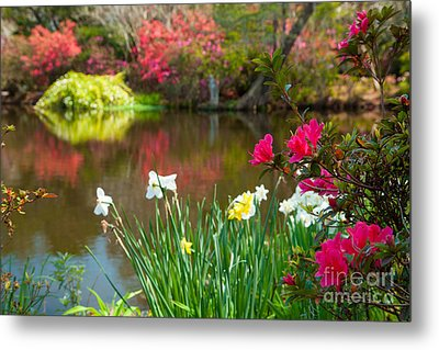 Magnolia Plantation And Gardens Metal Print by Iris Greenwell