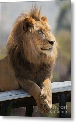 Majestic Lion Metal Print by Sharon Foster