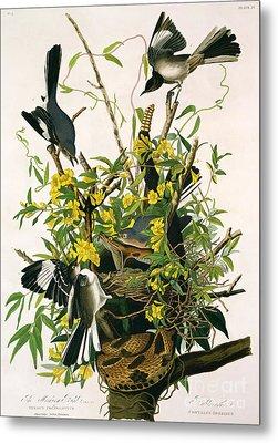 Mocking Birds And Rattlesnake Metal Print by John James Audubon