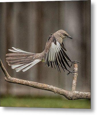 Mockingbird  Metal Print by Rick Barnard