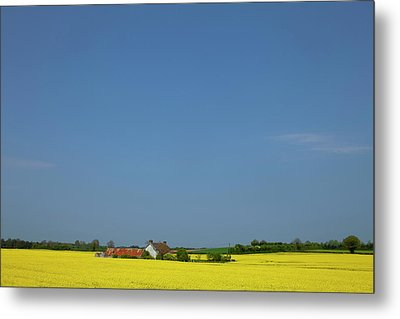 Old Farm Surrounded In Oilseed Rape Metal Print by Panoramic Images