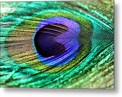 Peacock Feather Metal Print by Heike Hultsch