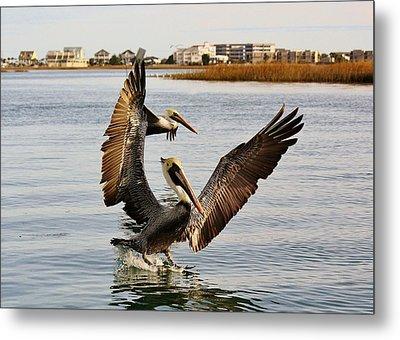Pelicans Flying Through The Marsh Metal Print by Paulette Thomas