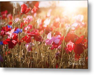 Poppies In Sunshine Metal Print by Elena Elisseeva