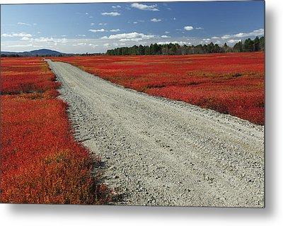 Road Through Autumn Blueberry Maine Metal Print by Scott Leslie