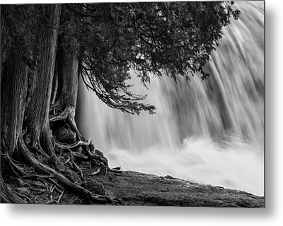 Rooted In Spring  Metal Print by Mary Amerman