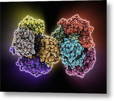 Serotonin N-acetyltransferase Complex Metal Print by Science Photo Library