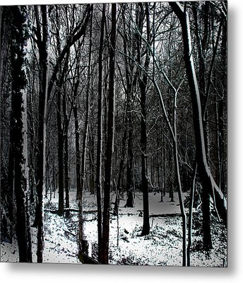 Snow Covered Woodland Metal Print by Martin Newman