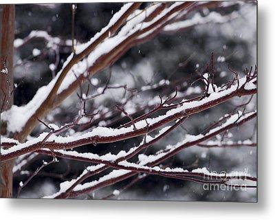 Snowfall And Tree Metal Print by Elena Elisseeva
