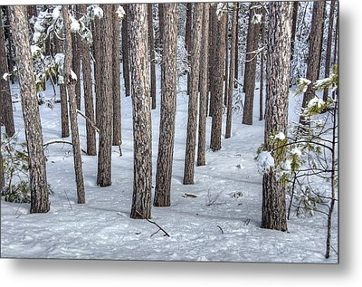 Snowy Woods Metal Print by Donna Doherty