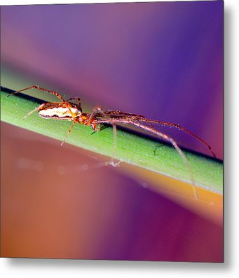 Spider In The Reeds Metal Print by Toppart Sweden