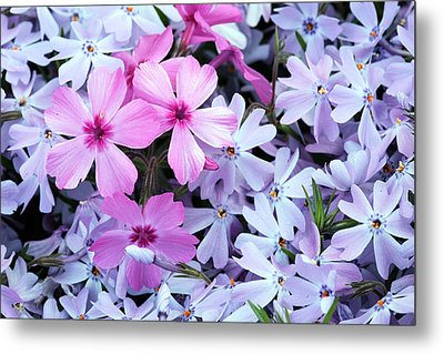 Standing Out Metal Print by JC Findley