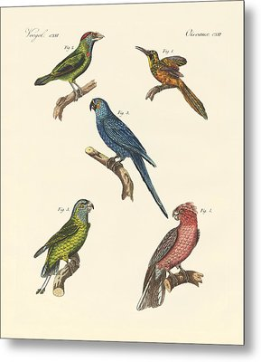Strange Climbing Birds Metal Print by Splendid Art Prints