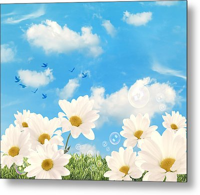 Summer Daisies Metal Print by Amanda And Christopher Elwell