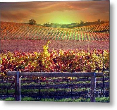 Sunrise Vineyard Metal Print by Stephanie Laird