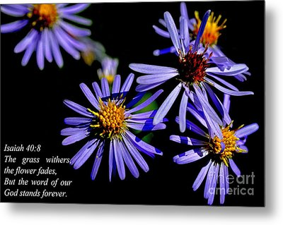The Flower Fades Metal Print by Thomas R Fletcher