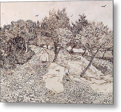 The Olive Trees Metal Print by Vincent Van Gogh