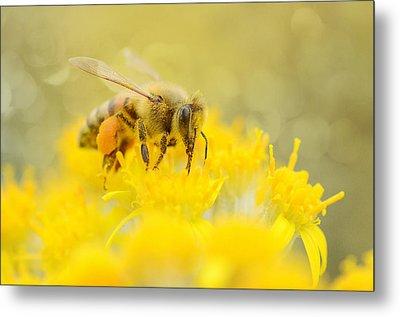 The Pollinator Metal Print by Fraida Gutovich
