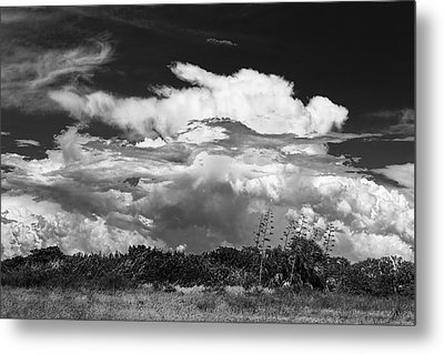 This Is What I See Metal Print by Marvin Spates
