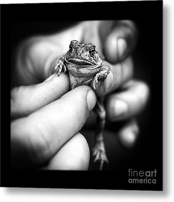 Toad In Hand Metal Print by Edward Fielding