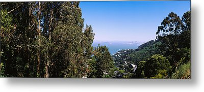 Trees On A Hill, Sausalito, San Metal Print by Panoramic Images