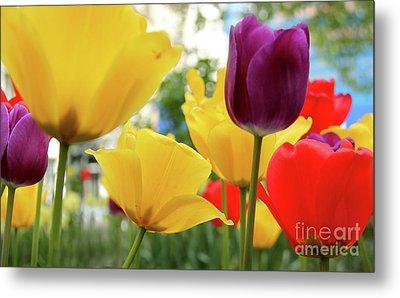 Tulips  Metal Print by Mark Ashkenazi