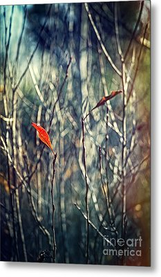 Untitled Metal Print by HD Connelly