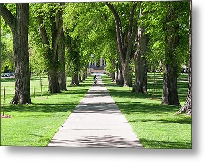 Usa, Co, Fort Collins Metal Print by Trish Drury