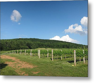 Vineyards In Va - 12127 Metal Print by DC Photographer