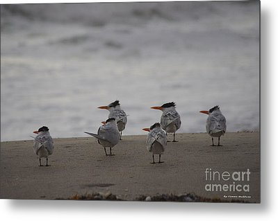 Waiting For The Sunrise Metal Print by Tannis  Baldwin