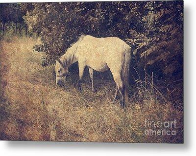 White Horse Metal Print by Jelena Jovanovic