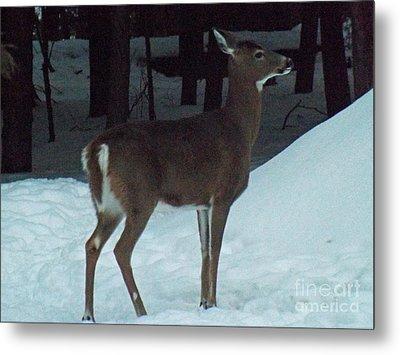 White Tail Deer Metal Print by Brenda Brown