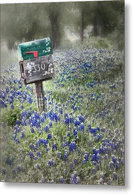 You've Got Mail Metal Print by David and Carol Kelly