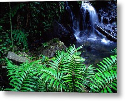 El Yunque National Forest Metal Print by Thomas R Fletcher
