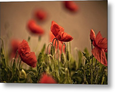 Summer Poppy Metal Print by Nailia Schwarz