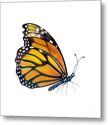 103 Perched Monarch Butterfly Metal Print by Amy Kirkpatrick