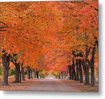 1110-7483 Maplewood Cemetery At Harrision Arkansas Metal Print by Randy Forrester