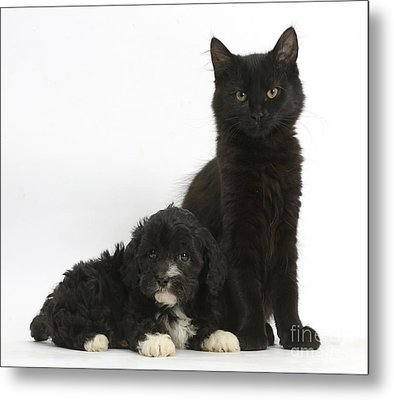 Kitten And Puppy Metal Print by Mark Taylor