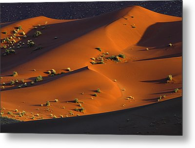 120118p071 Metal Print by Arterra Picture Library