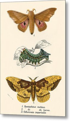 Butterflies Metal Print by English School