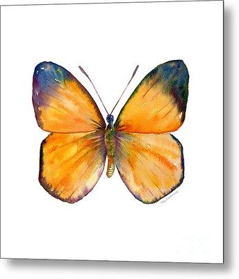 19 Delias Anuna Butterfly Metal Print by Amy Kirkpatrick