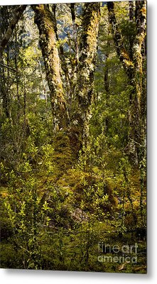 Ancient Woods Metal Print by Tim Hester