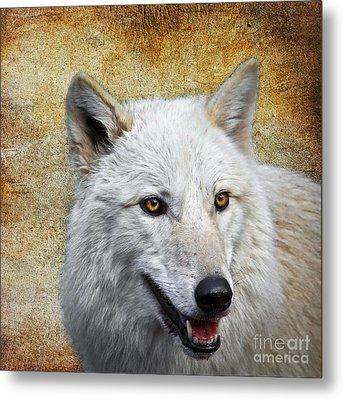 Arctic White Wolf  Metal Print by Steve McKinzie