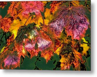 Autumn Leaves Metal Print by David Patterson